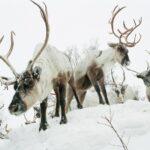 Murmanski oblasti justiitsministeerium loobus varasematest süüdistustest Saamide pärandi fondi vastu