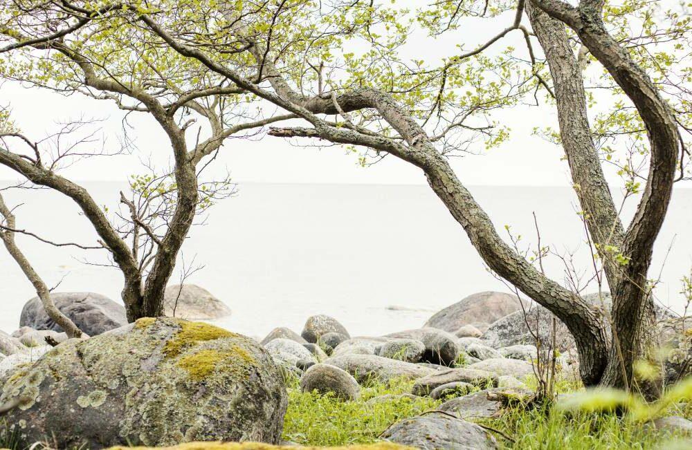 kaks puuvõra kivisel rannal